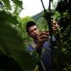 Inisiasi Pengelolaan Kawasan Konservasi melalui Mekanisme Whakatane di Kabupaten Lebong Bengkulu